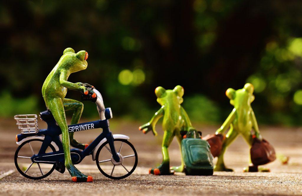 Organizar un viaje con ranas