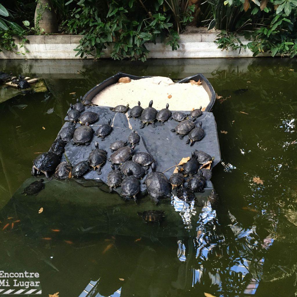 tortugas Atocha