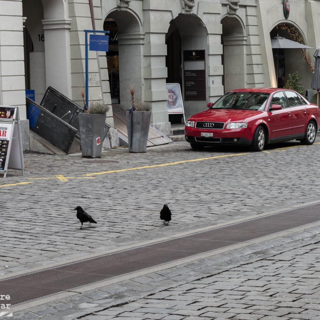 cuervos berna